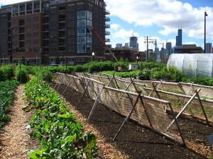 Urban Gardening in Chicago. Der Trend kommt aus den USA.